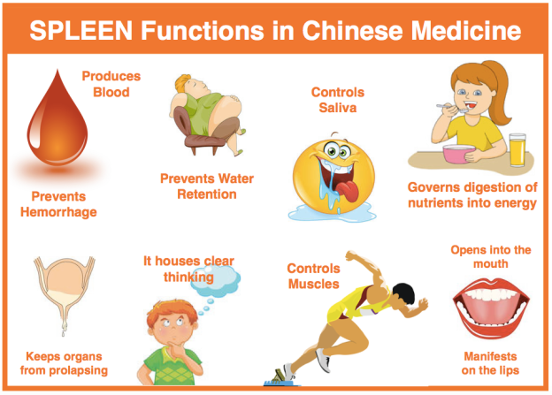Spleen-Function-in-TCM.png